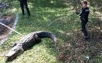 100-letni aligator na Florydzie