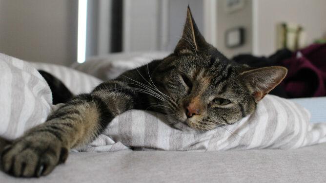 Alergia na sierść kota? Nadchodzi ratunek i dla ciebie, i dla niego